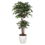 造花 観葉植物 「トロピカルベンジャミン 180cm」 光触媒