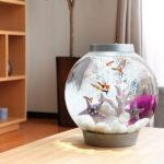 おしゃれなインテリアに!熱帯魚が飼える水槽セット・小型水槽16選