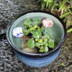 メダカ鉢 金魚鉢 睡蓮鉢 水鉢 手水鉢 すいれん鉢 陶器鉢 めだか鉢 ハス鉢 水連鉢 鉢 信楽焼 …