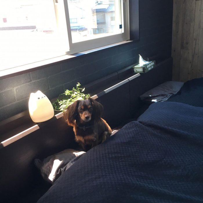 ベッドサイドランプコーディネート