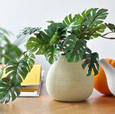 小さい観葉植物