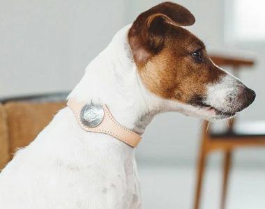 愛犬にベストな首輪を!おしゃれで可愛いおすすめブランド首輪10選