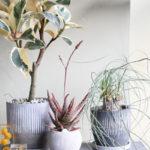 お気に入りが見つかる!おしゃれな観葉植物が買える通販サイト10選