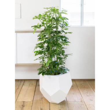 おしゃれな大型観葉植物