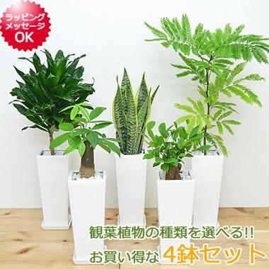 おしゃれな観葉植物セット