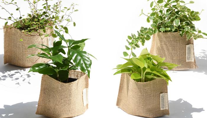 観葉植物通販サイト