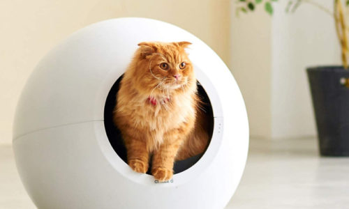 猫好き必見!猫と飼い主が居心地良く生活できるおしゃれな猫グッズまとめ