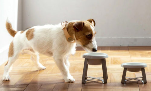 犬を飼う時に必要なアイテム特集!おしゃれなドッググッズまとめ