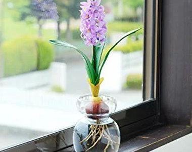 水で育てる植物!おしゃれなバルブベース(水耕栽培)おすすめ10選