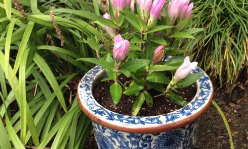 落ち着きと美しさを!おしゃれな和風の植木鉢おすすめ10選